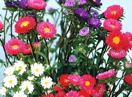 Как правильно засушить цветы для сухой флористики?