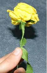 получившаяся роза
